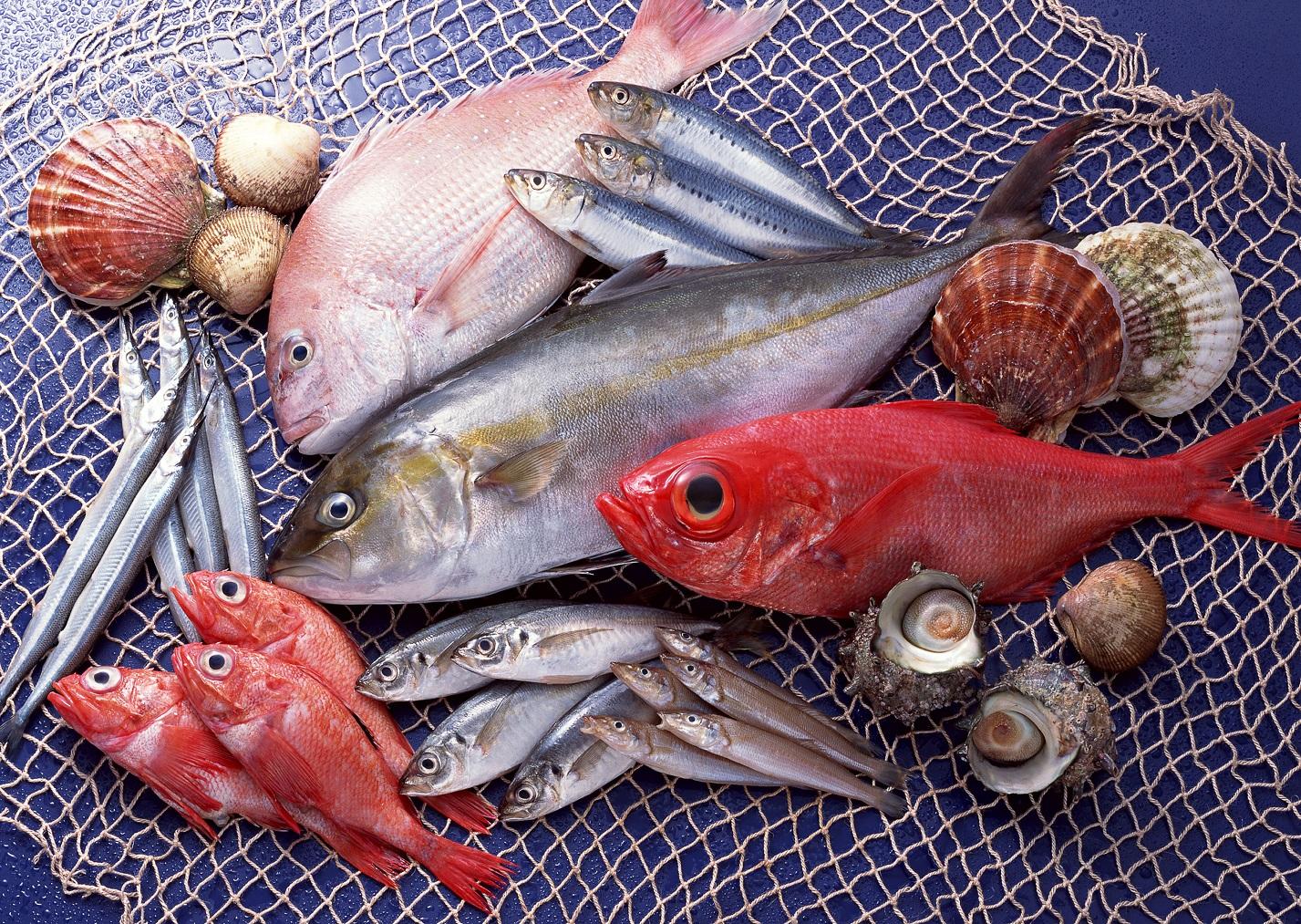 các loại cá biển ngon1