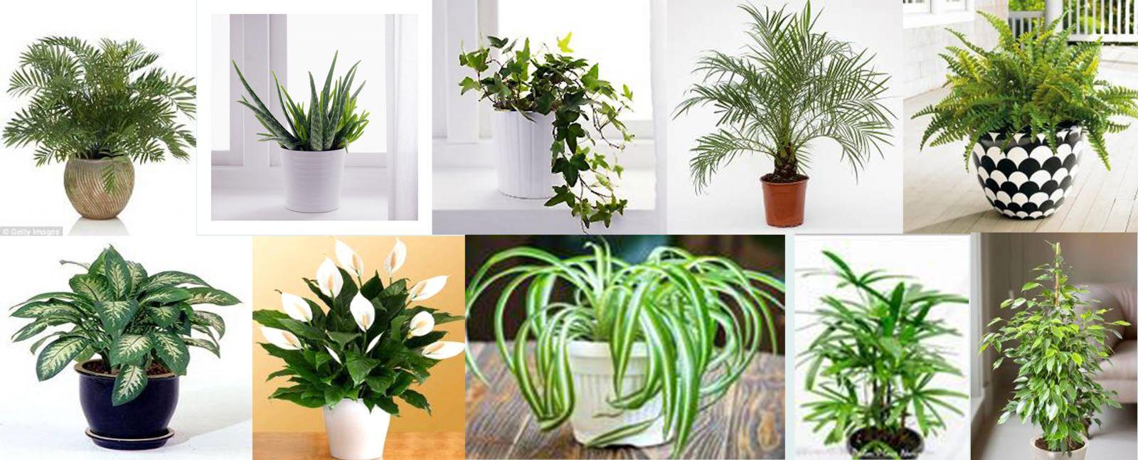 Kể tên các loại cây cảnh trong nhà - Cây trồng trong nhà tốt nhất MAXHOME