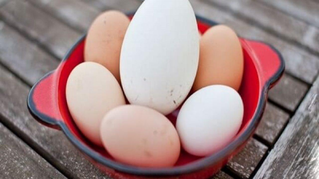 trứng ngỗng kỵ với gì