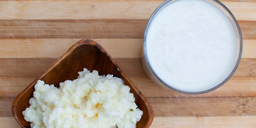 Sữa chua làm từ con nấm Kefir